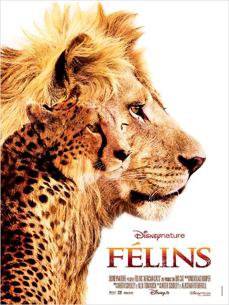 affiche du film Félins