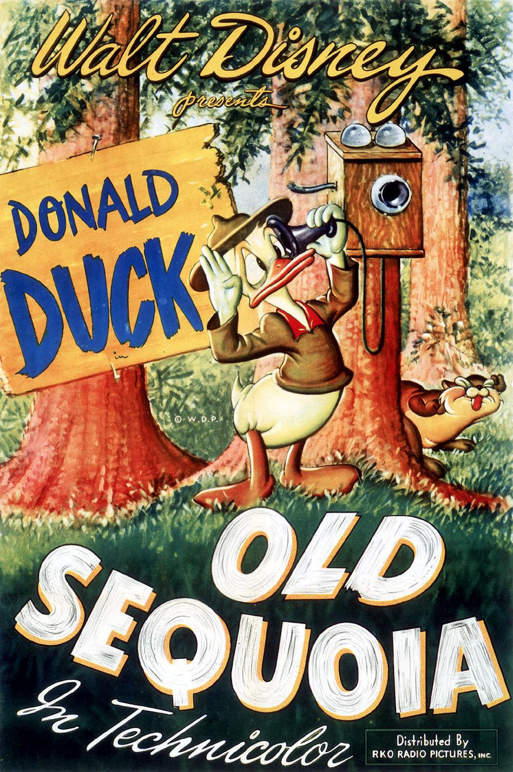 affiche du film Le Vieux Séquoia