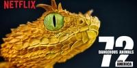 72 animaux dangereux en Amérique latine (72 Dangerous Animals: Latin America)
