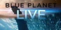 Blue Planet Live