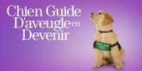Chien Guide d'aveugle en Devenir (Pick of the Litter)