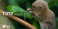 Tout mini (Tiny World)
