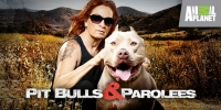 Pitbulls et prisonniers (Pit Bulls and Parolees)