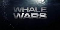 Justiciers des mers (Whale Wars)