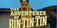 Rintintin (The Adventures of Rin Tin Tin)