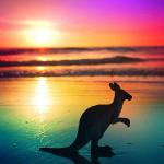 avatar Skippy le Kangourou