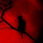 avatar redbluemoon