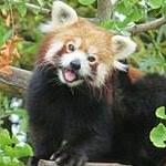 avatar Redrea