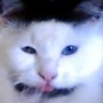 alexandra59000 avatar