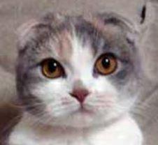 avatar SerenityNeko
