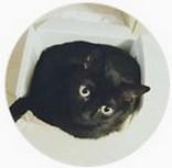 avatar AyanePassions