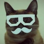 avatar MrGoodCat