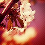 avatar Merean